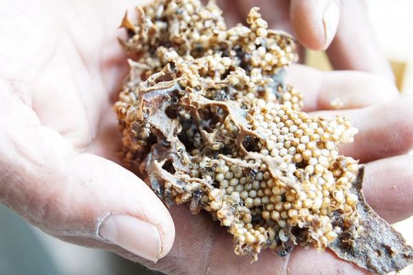 都市部ではなく田舎で売買される希少な蜂蜜たち