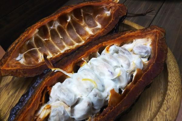 「カカオパルプ」って何?日本でも味わえる希少な商品をお取り寄せ&飲み比べ