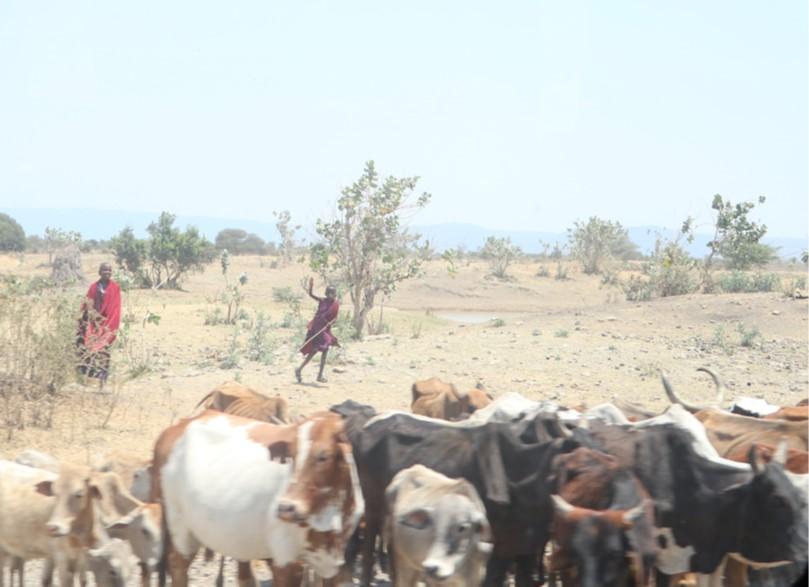 タンザニアとモバイル革命4