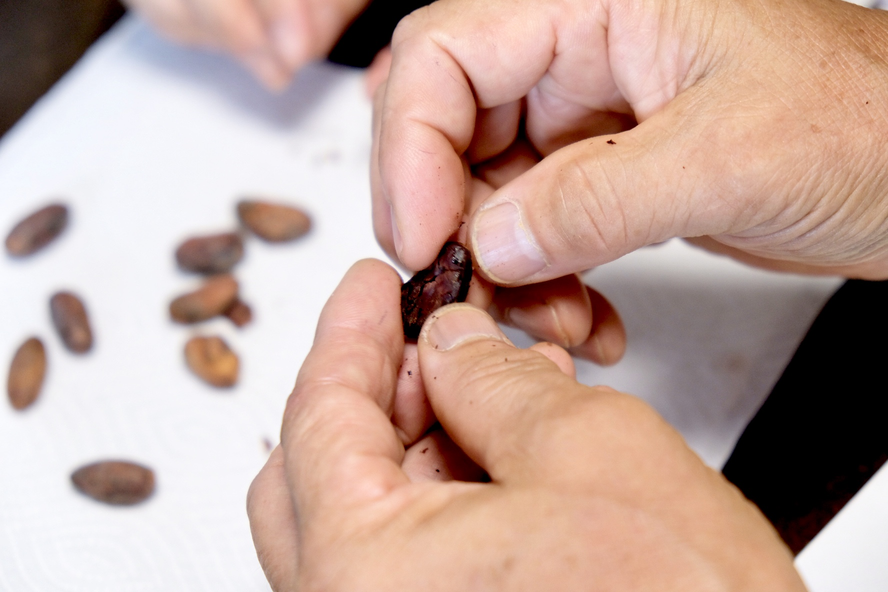 チョコレート研究の第一人者が考える、日本のビーントゥバー事情とは。佐藤清隆さん インタビューvol.2