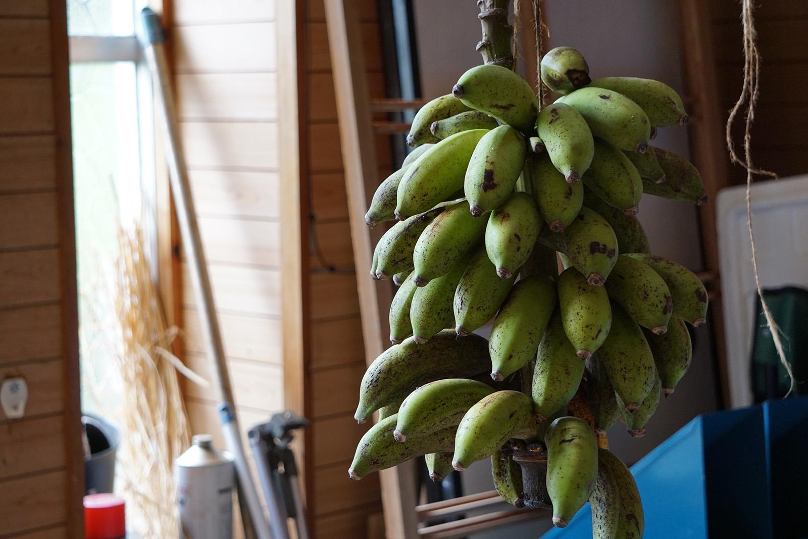 カカオ愛農大生のカカオ体験記① 文化が混じり自然と生きる場所「やんばる」編